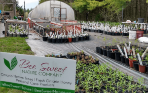plants outside of a small dome greenhouse with bee sweet's H frame sign   Top Local Destinations To Visit This Summer on The Dumfries Summer Trail
